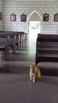 Church Kitty keeping a watchful eye. Photo Credit: J. Sommer