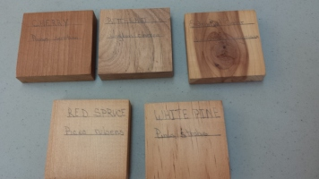Participants compared wood grain. Photo Credit: J. Sommer