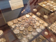A robust Kahuli shell collection is housed in the original 1840s structure of Hale Hōʻikeʻike.