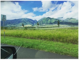 On our drive from Kahului to Makawao